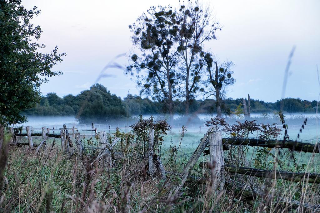 Nebel-Stahnsdorf1.jpg